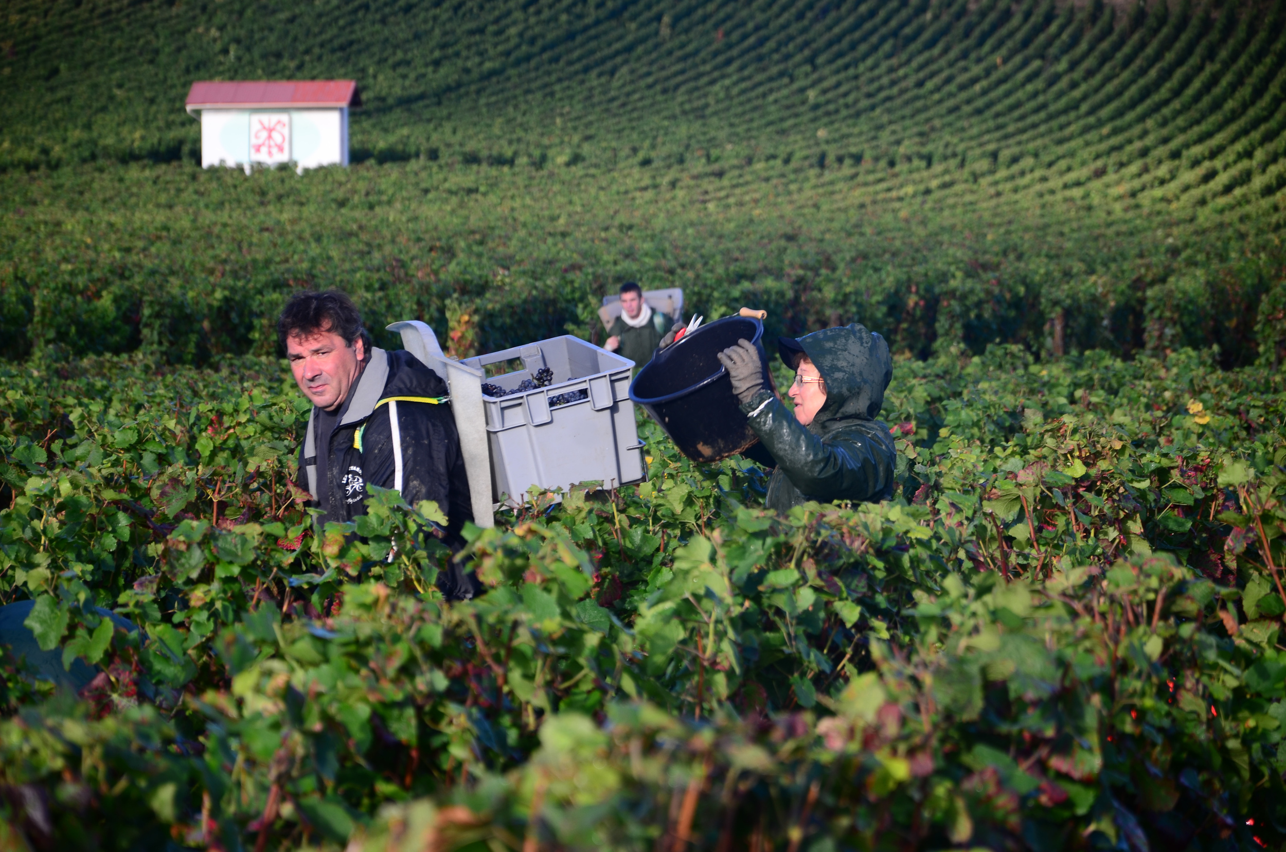 Hungry_Cyclist_Burgundy_Harvest12-99.jpg
