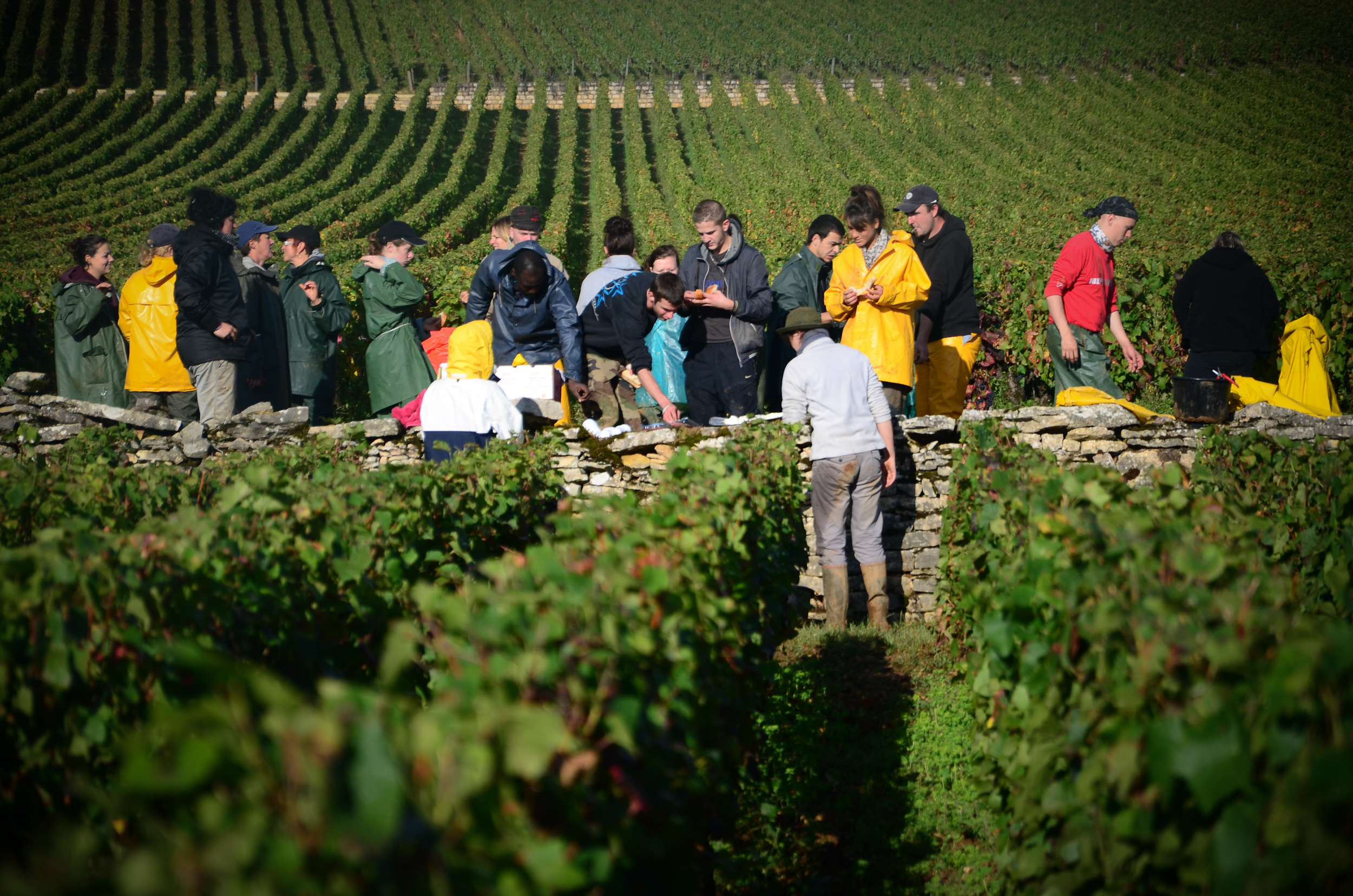 Hungry_Cyclist_Burgundy_Harvest12-106.jpg