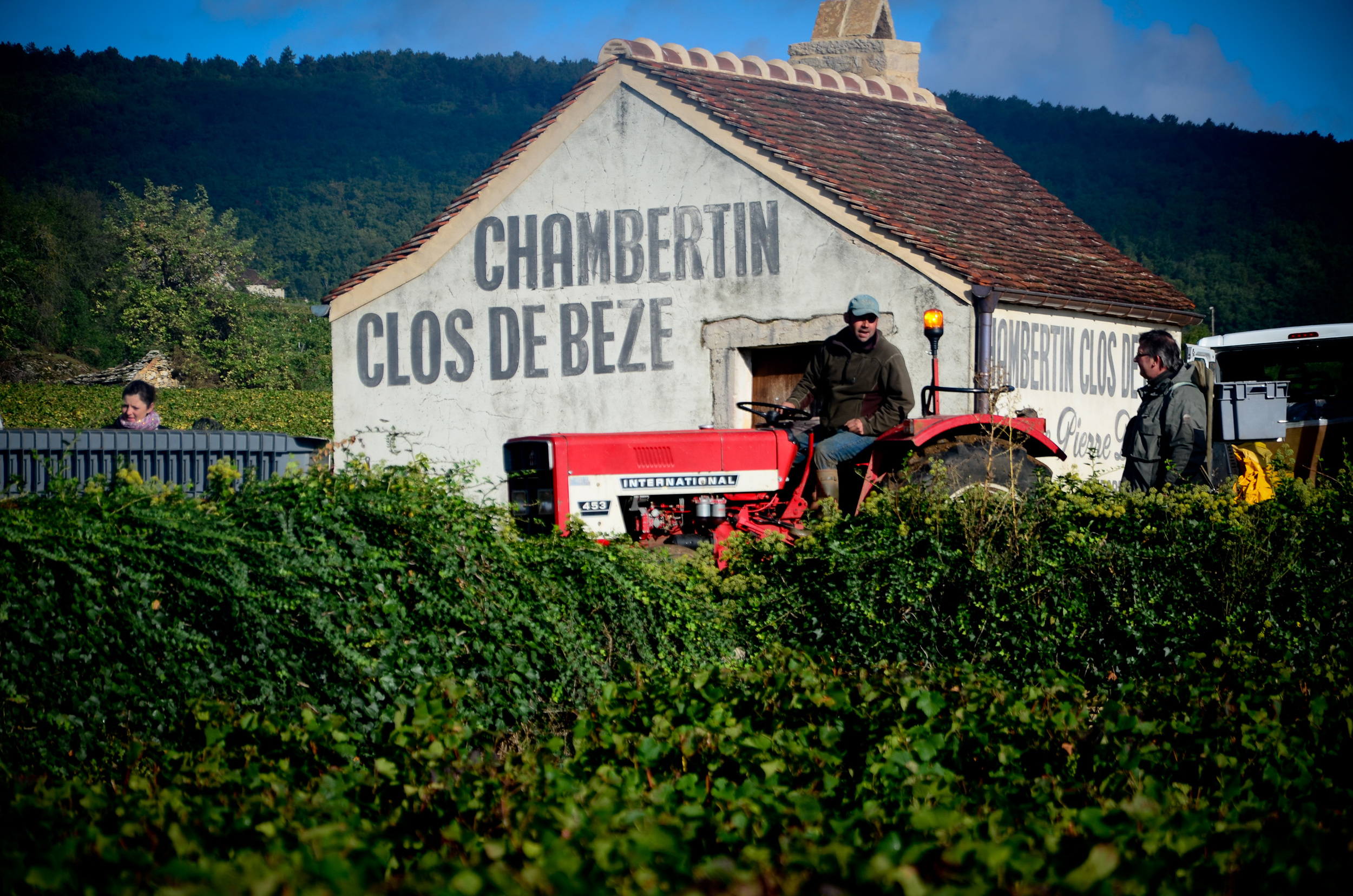 Hungry_Cyclist_Burgundy_Harvest12-107.jpg