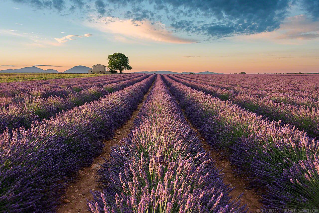 Elia-Locardi-Travel-Photograhy-Colors-of-Valensole-France-1280-WM-DM.jpg