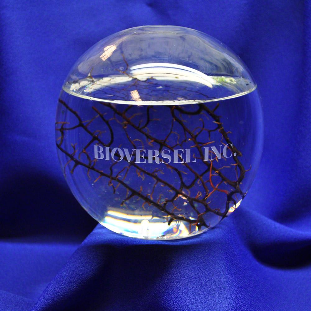 bioversal-ls-ww.jpg