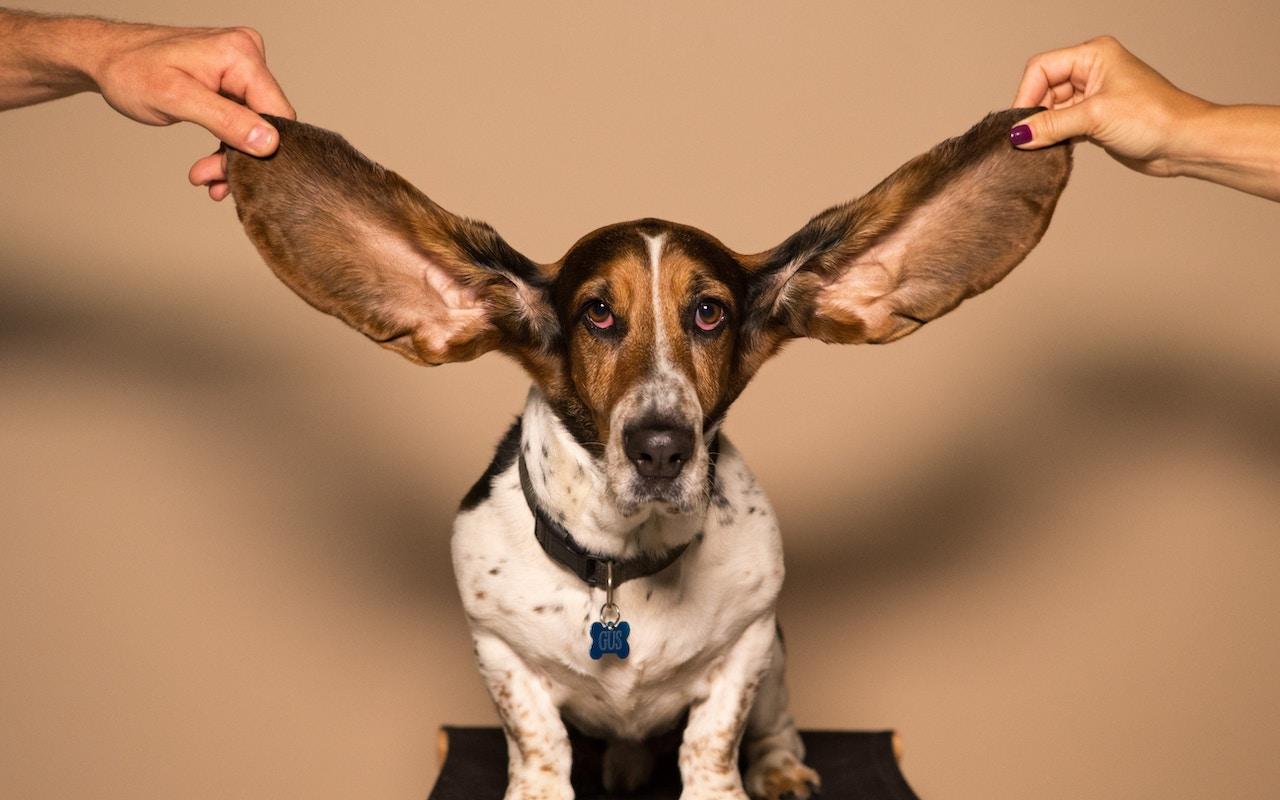 Live-Listen-dog-ears-photo.jpg