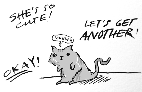 kitten3.png