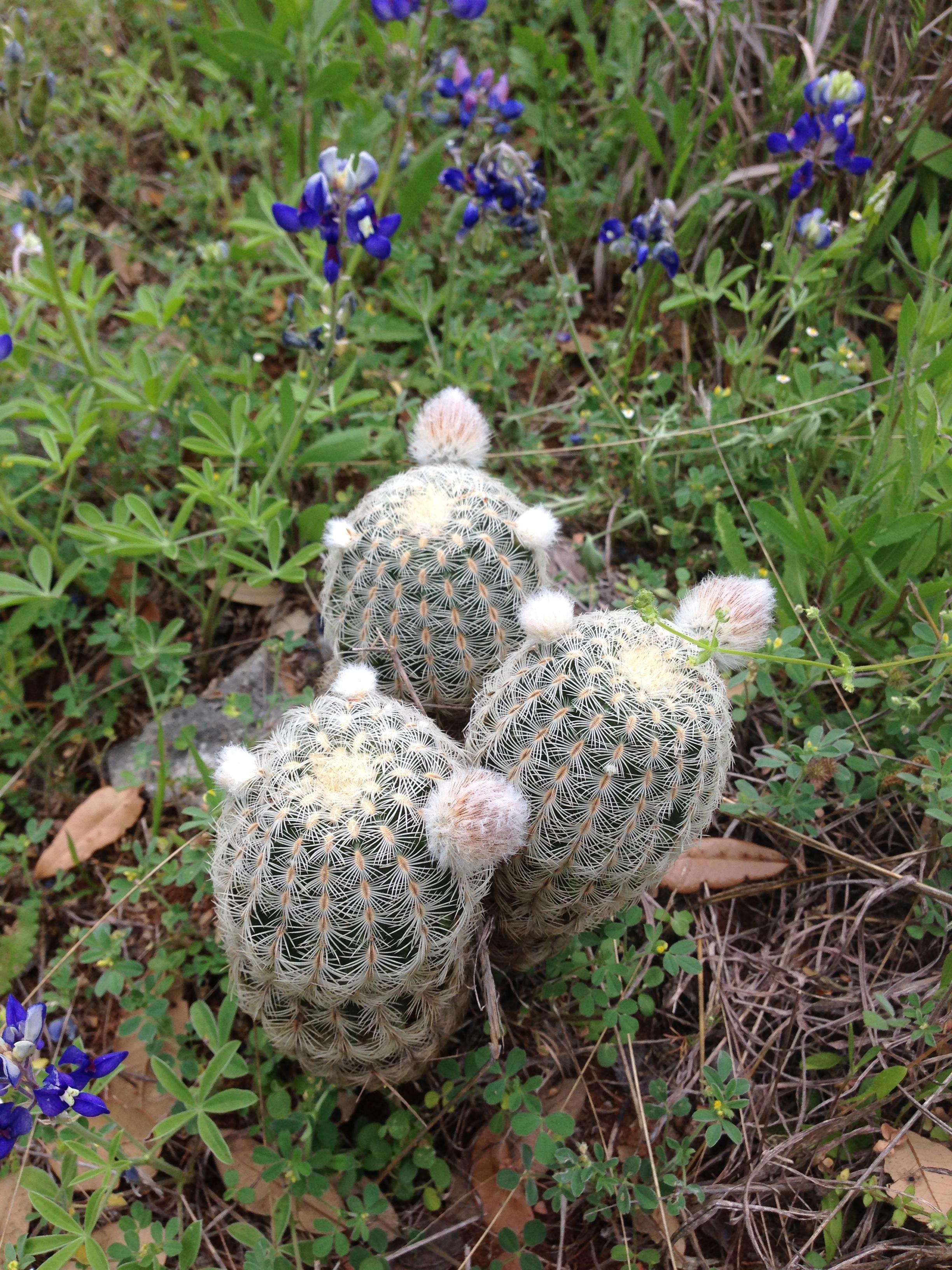 cupcactus.jpg