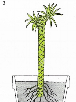 Image from  The Time-Life Encyclopedia of Gardening: Foliage House Plants , 1972.