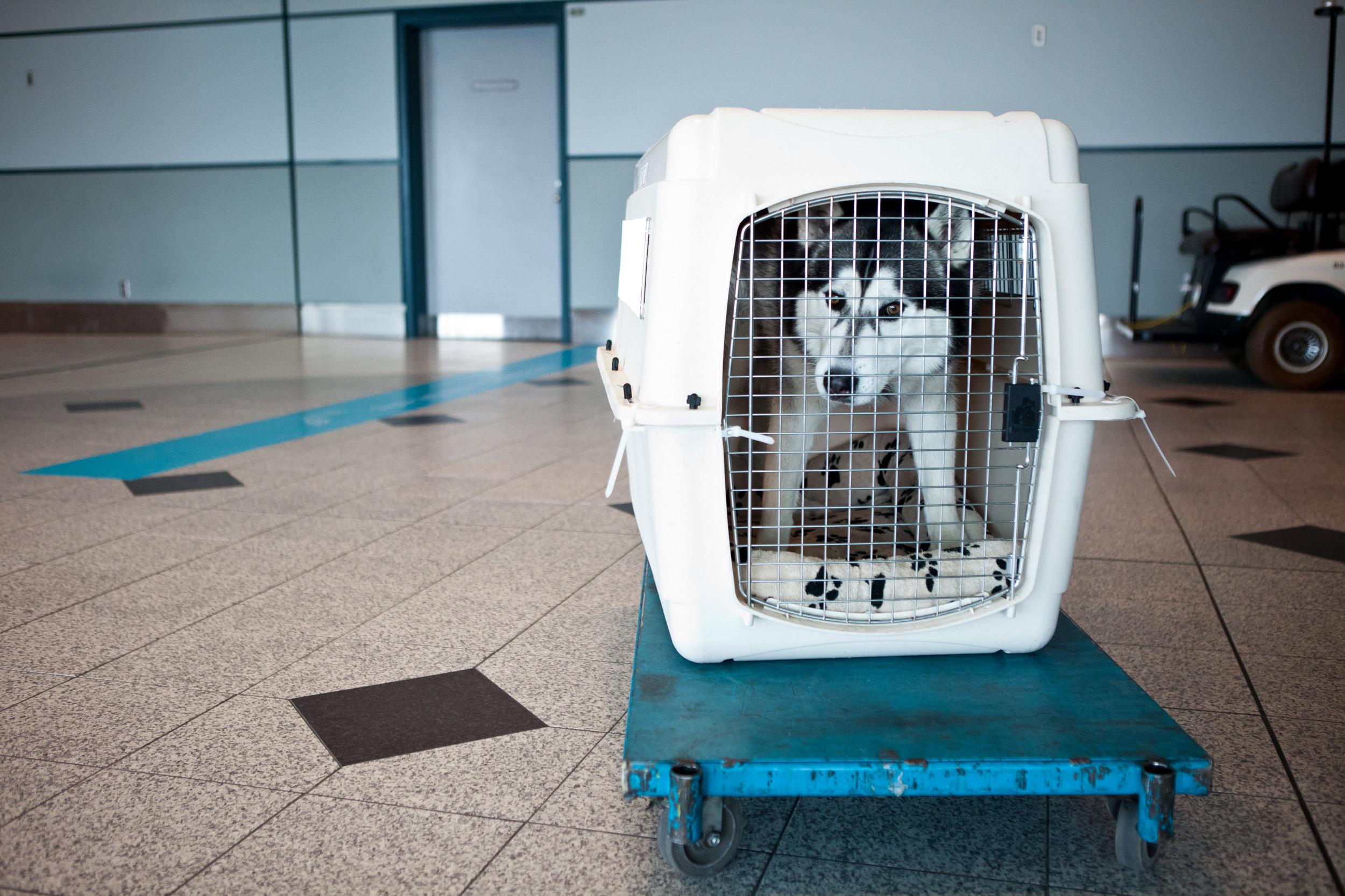 shlomi-amiga-dogs-in-cages-2.jpg