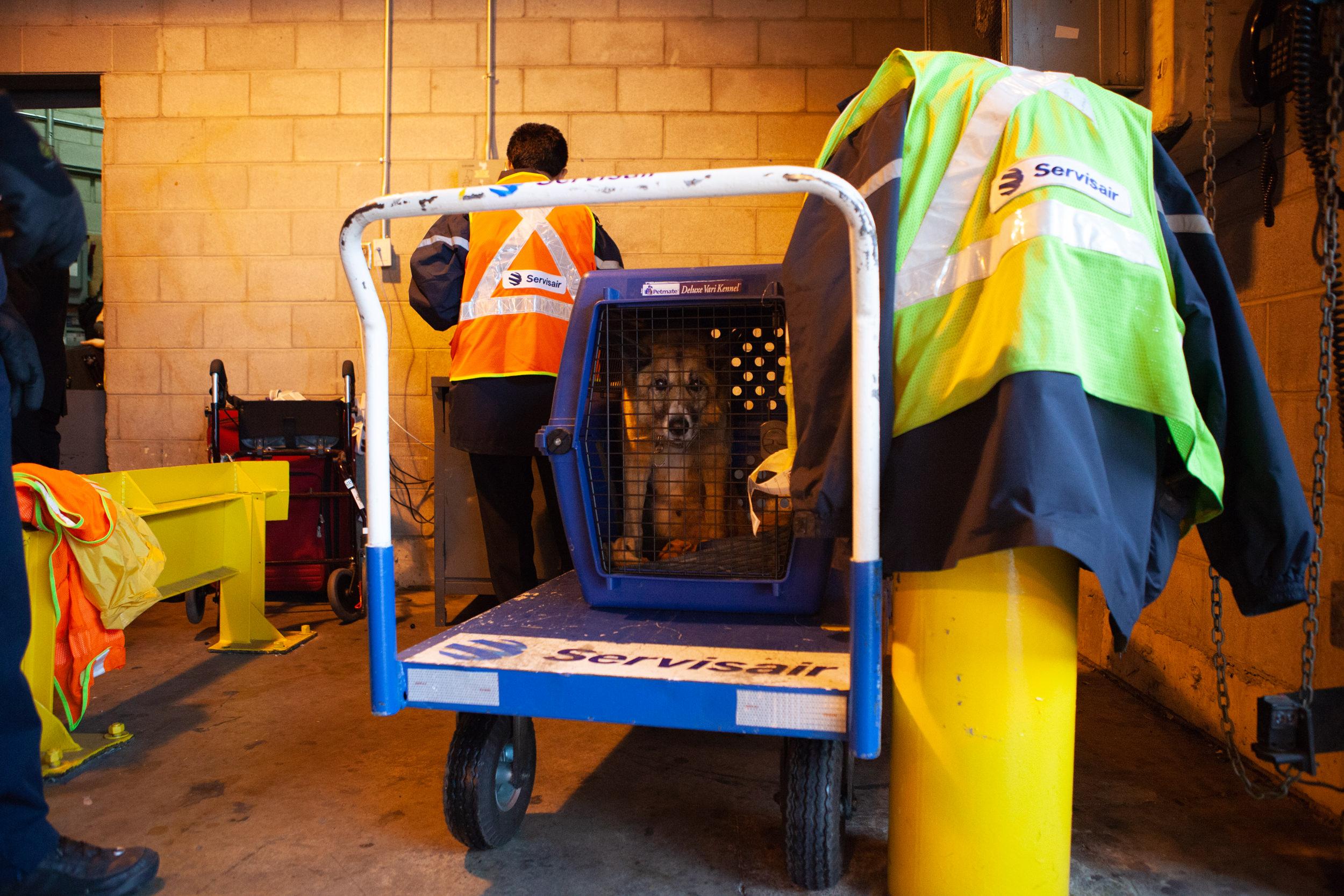 shlomi-amiga-dogs-in-cages-3.jpg