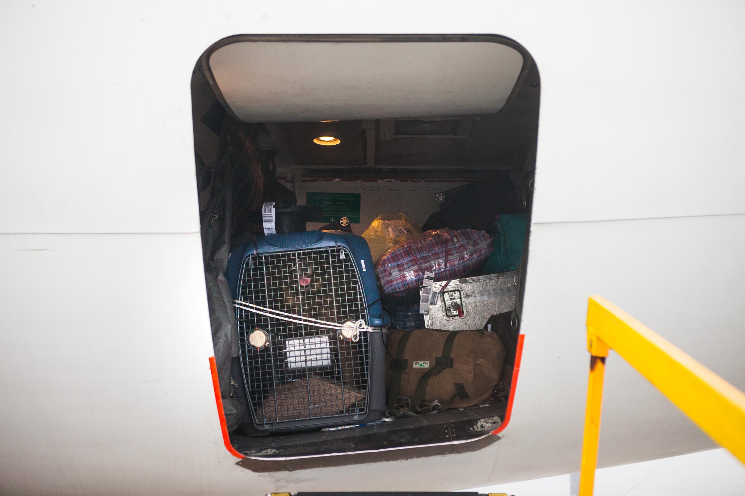 shlomi-amiga-dogs-in-cages-7.jpg