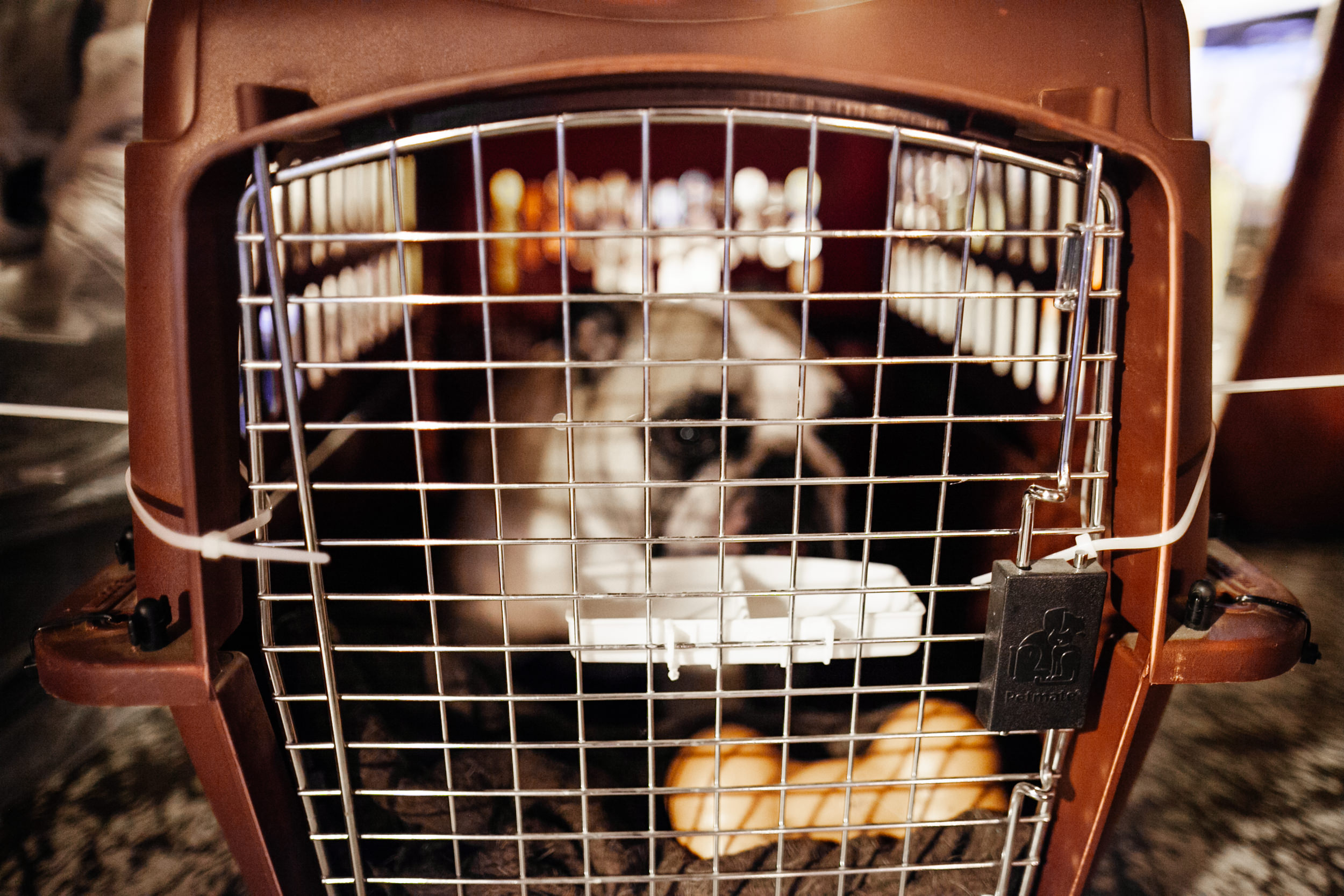 shlomi-amiga-dogs-in-cages-8.jpg