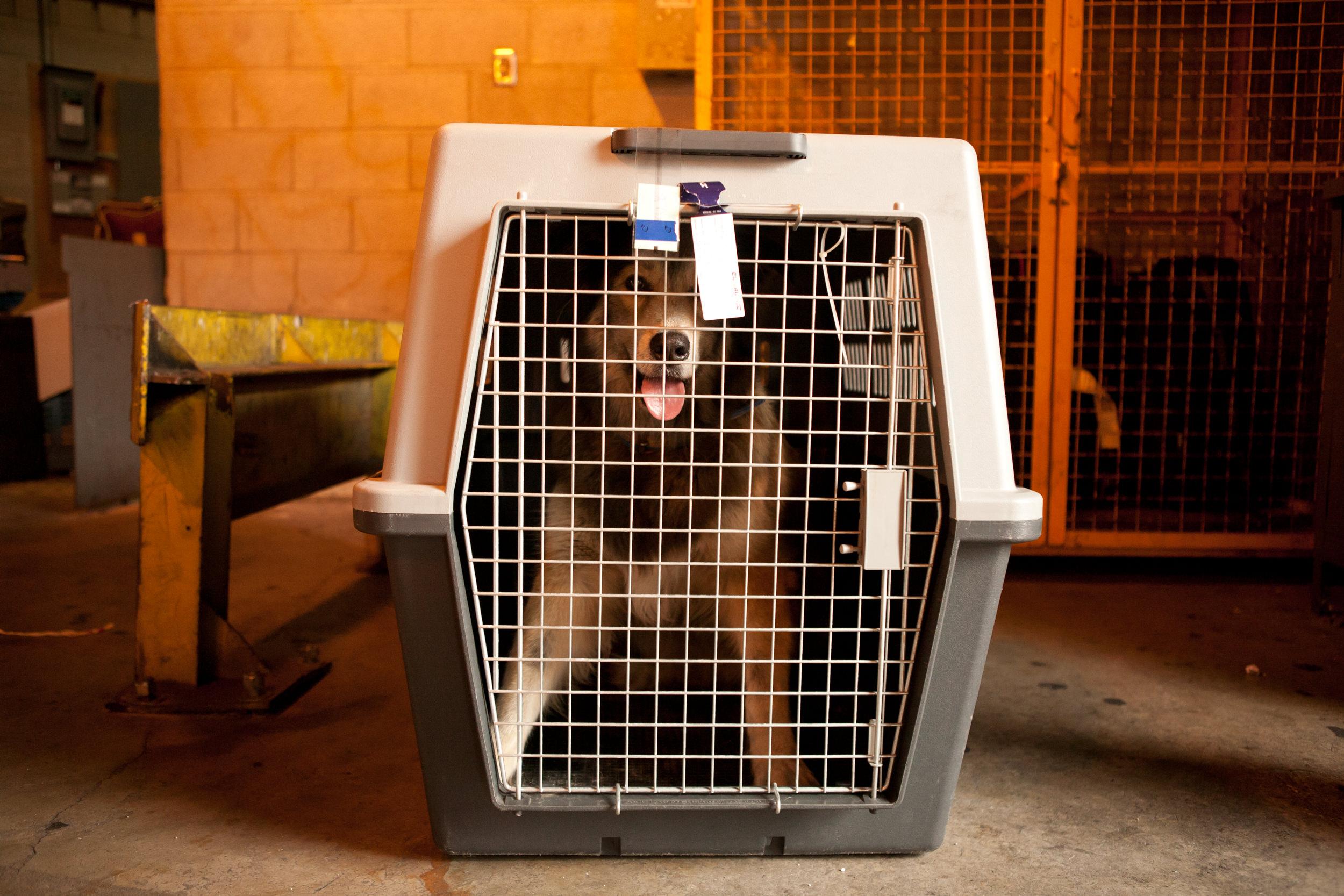 shlomi-amiga-dogs-in-cages-10.jpg