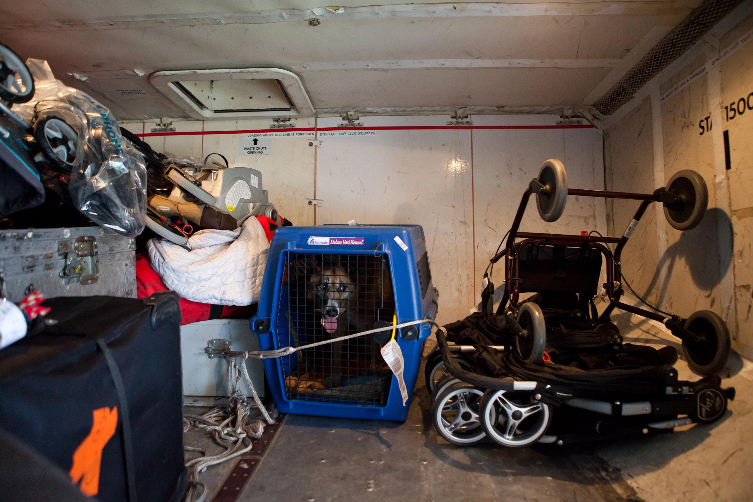 shlomi-amiga-dogs-in-cages-11.jpg