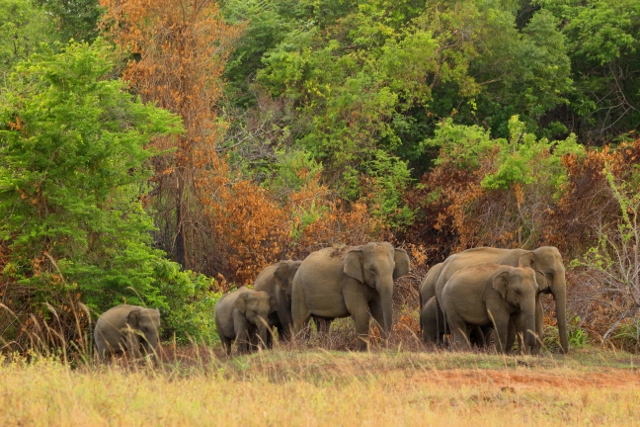 A family of elephants emerging from the forest cover to use a water tank shared with people on the outskirts of a village