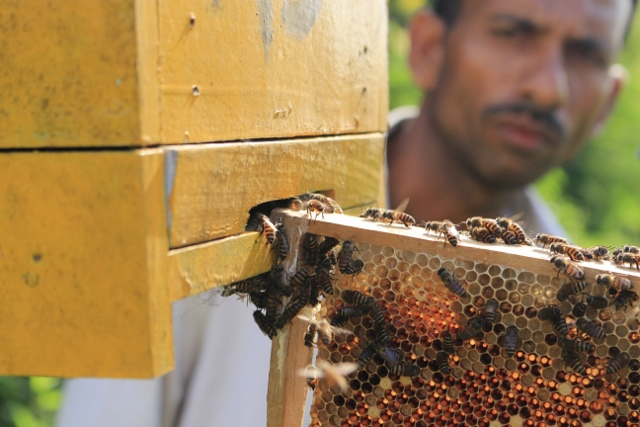 Teaching farmers how to transfer bees into the hives on their fences