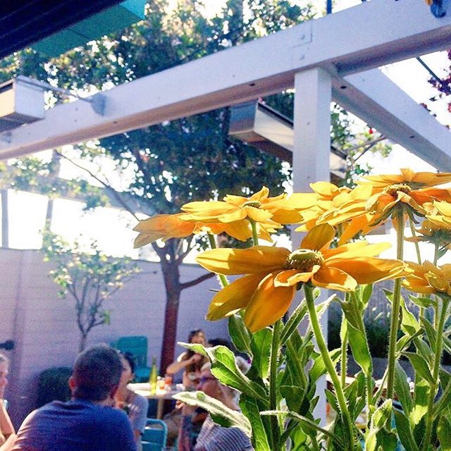 Sunny Spot weather report: 72 degrees and sunny ☀️ Clear skies and a happy patio 🌼 #sunnyspotvenice #lunchtime