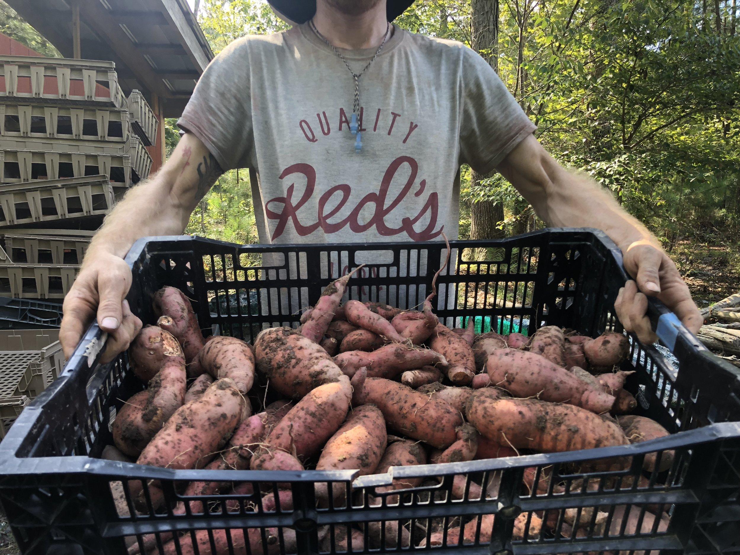 Sweet potato crate.jpg