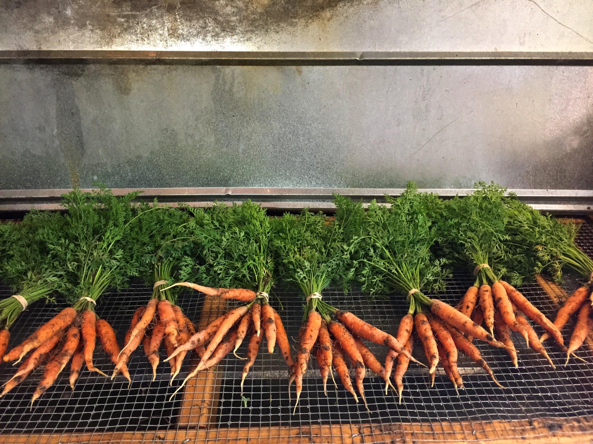 carrots dirty.JPG