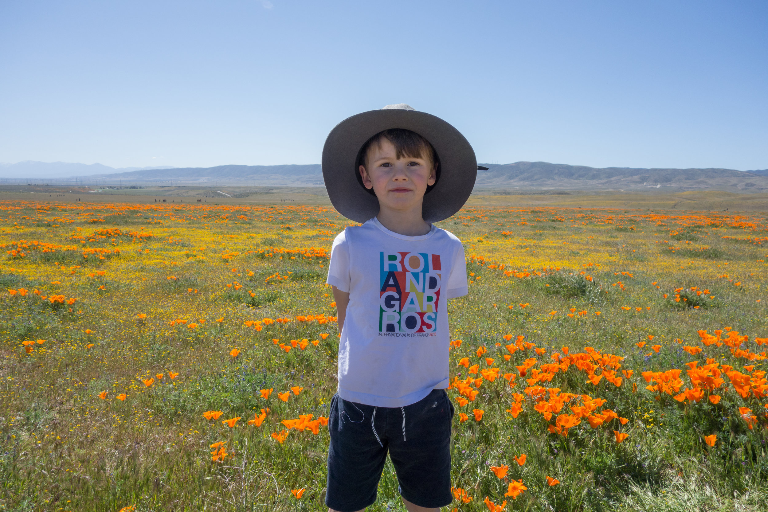 Dries in  Antelope Valley Poppy Fields
