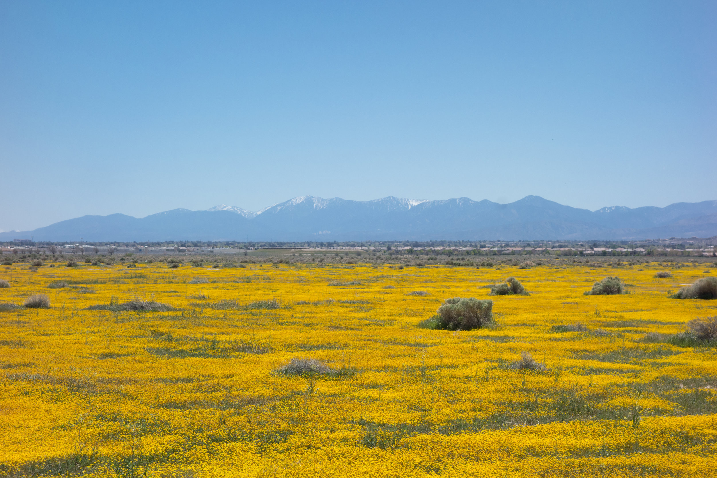 Snow covered mountains in the distance. The colors of all the wildflowers are just incredible. All the photos published here are all #nofilter and not retouched!
