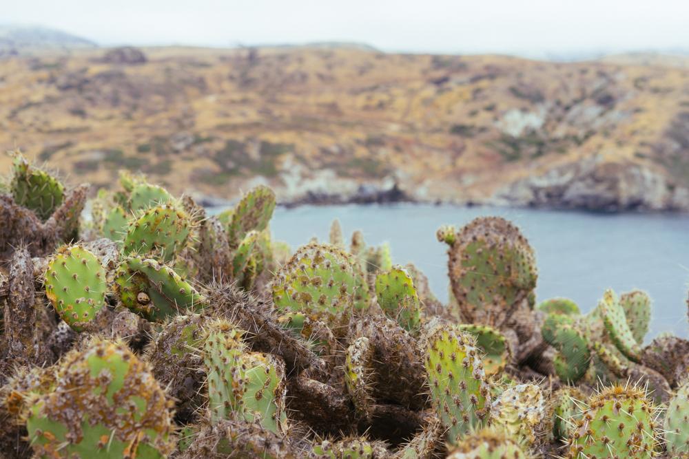 Catalina Island Trans Catalina Trail Cacti (56 of 73).jpg