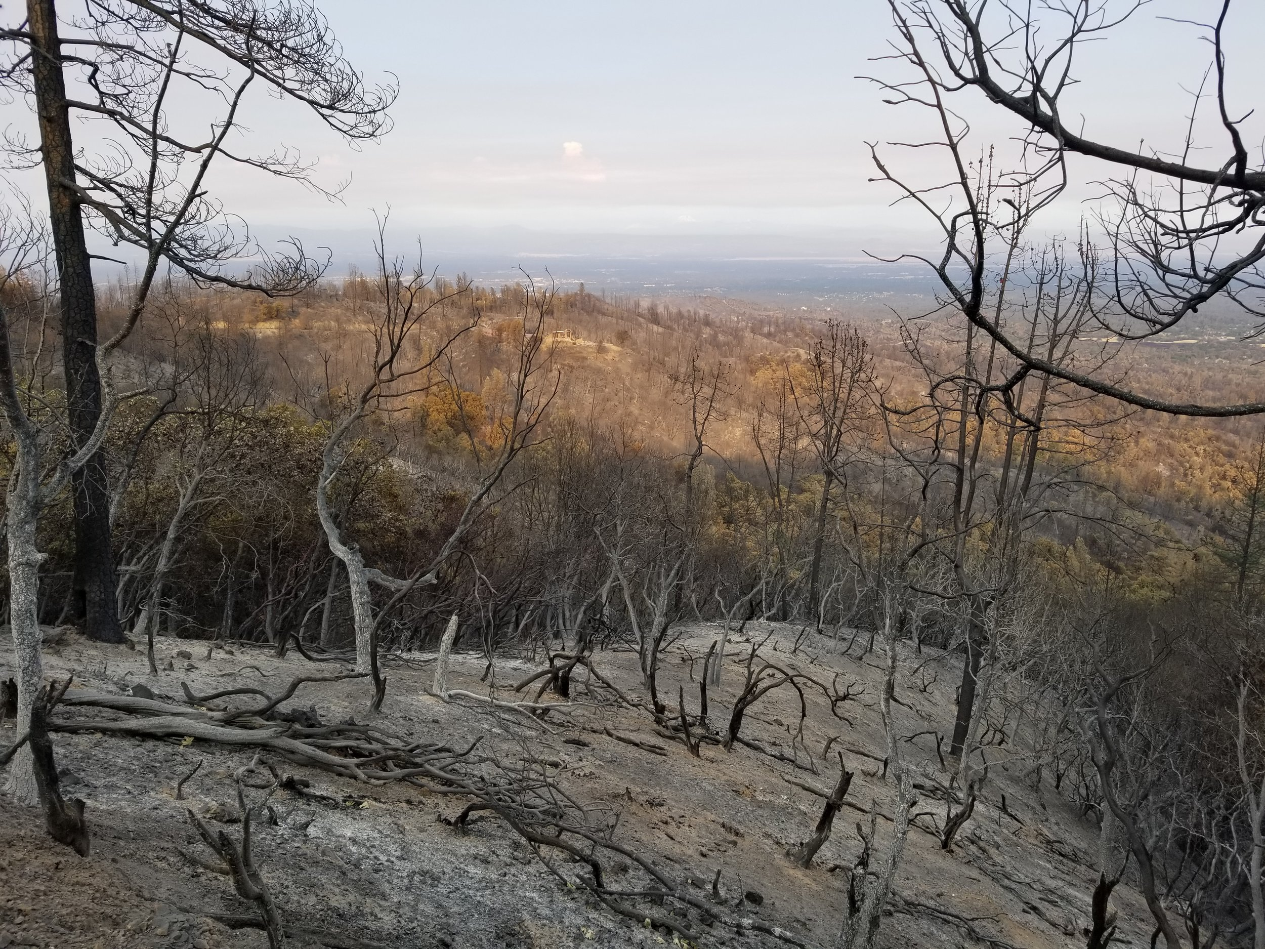Looking to the east from the ridge. The fire burned the hottest up this side. This will be an ideal vineyard site. Towards the top center you can see the remains of our neighbors house.