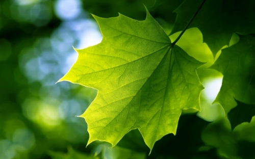 green_leaf-wide.jpg