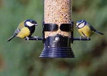 Great Tit on the left / Blue Tit on the right.