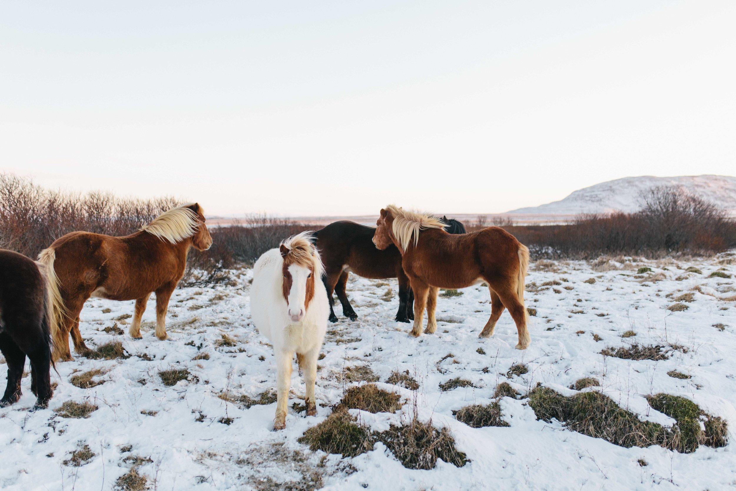 Iceland_Web-53.jpg