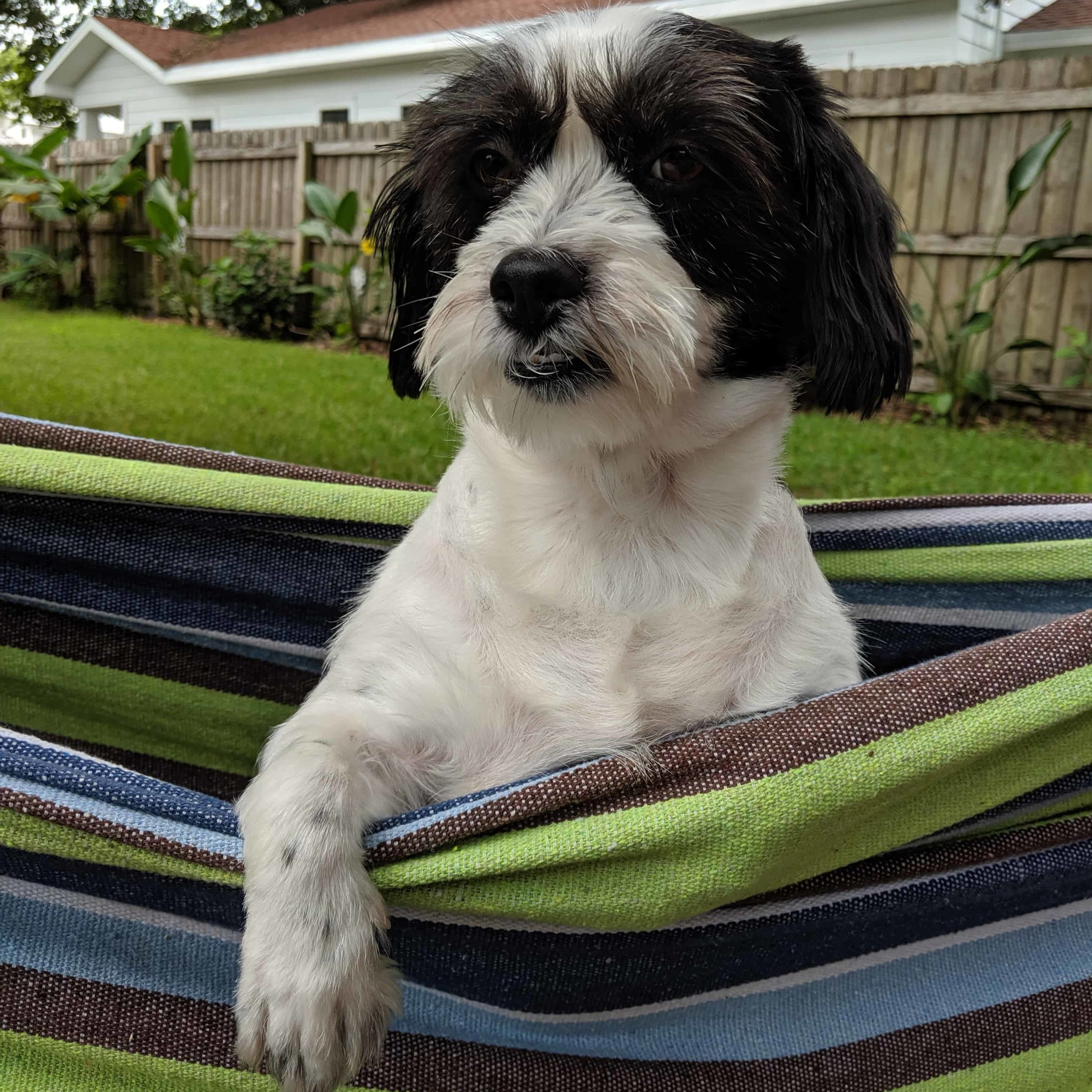 Penny, director of barketing - Penny joined the team in 2016. She raises team morale and manages to work snuggles into every work day. An out of the box thinker, she's been known take a bite out of any new office plants. Her best work happens in the hammock.