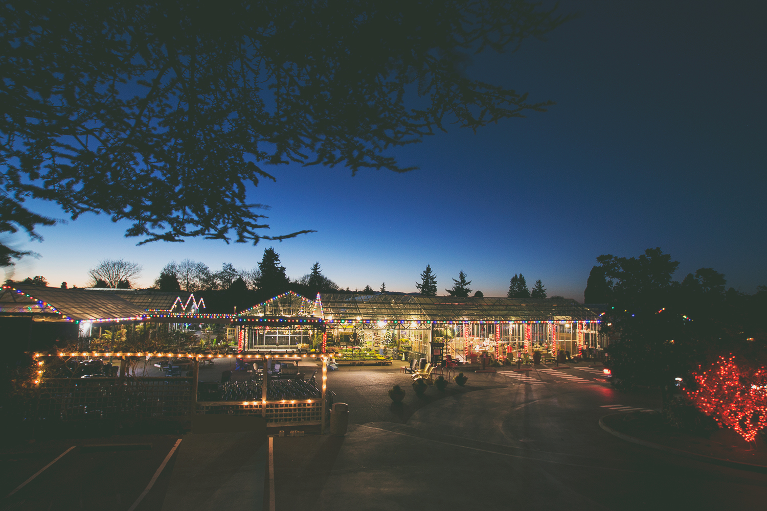 Entrance to Swansons at night