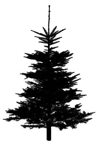 tree1 (2014_12_03 00_24_12 UTC).jpg