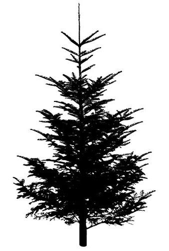 tree4 (2014_12_03 00_24_12 UTC).jpg