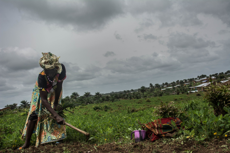 امرأة في قرية مانسانتيجي تزرع حقول الفول السوداني. وقد خلق الإيبولا صعوبات فيما يتعلق بتغطية النفقات.