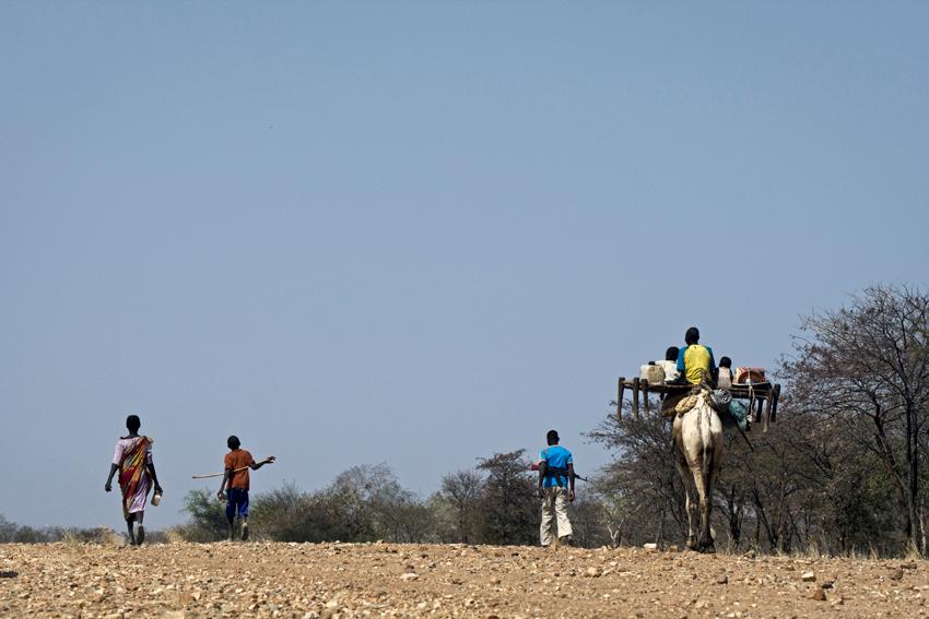 الراعي كوري حسن البالغ من العمر 18 عاماً وعائلته ينتقلون للبحث عن مناطق رعي أفضل وأكثر أمناً.   و  يتعايش مزارعو النوبة المستقرون سلمياً مع رعاة الماشية (كثيرون منهم من العرب)، ويحاولون معاً مواجهة تكتيكات الحكومة لتأجيج الانقسام العرقي والصراع.