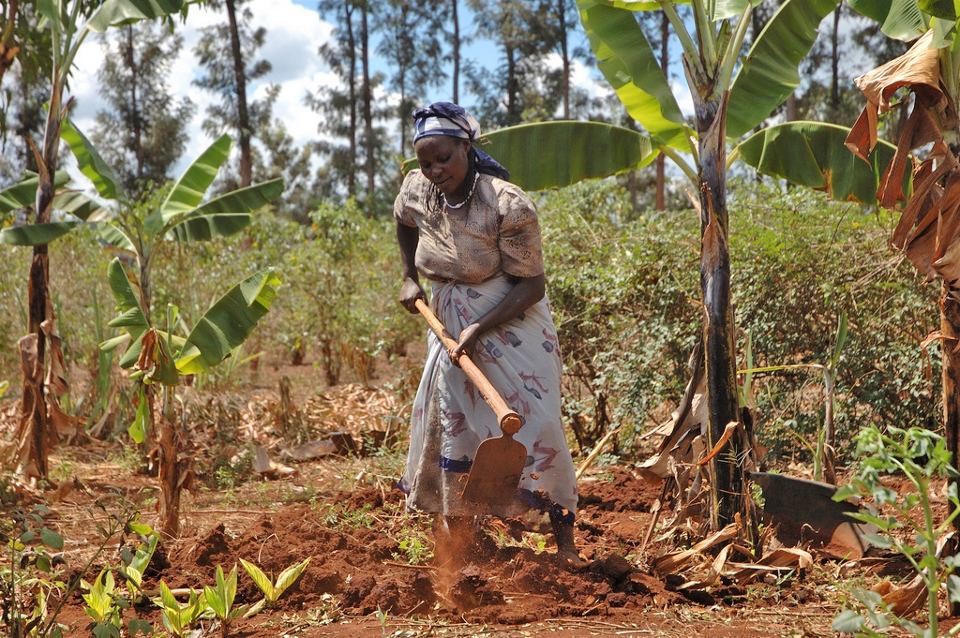 Kenyan farmers are adapting to climate change in the district of Embu, as a farmer prepares her maize plot for planting (CIMMYT)