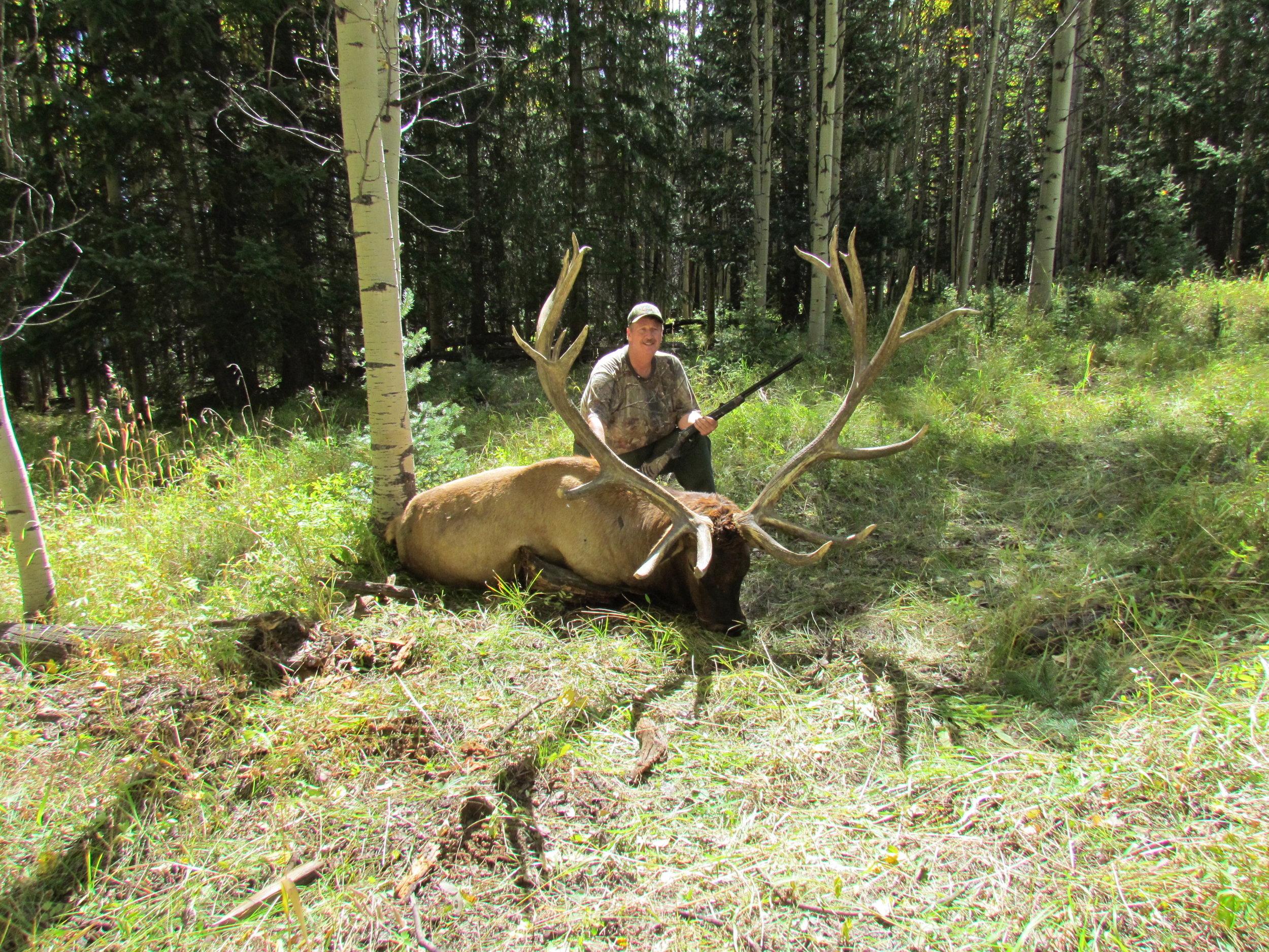 500 plus bull elk- CALL FOR PRICING