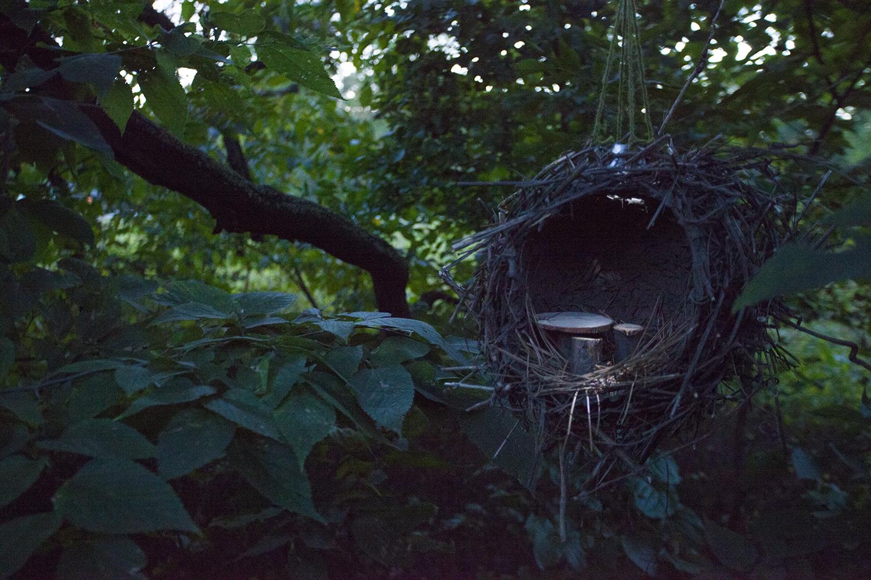Nest1.jpg