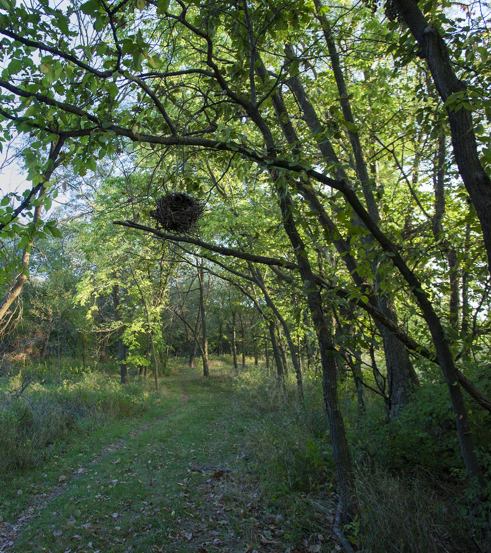 nest3.jpg