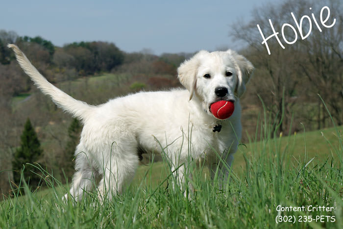 Puppy learning to fetch the ball, go Hobie!