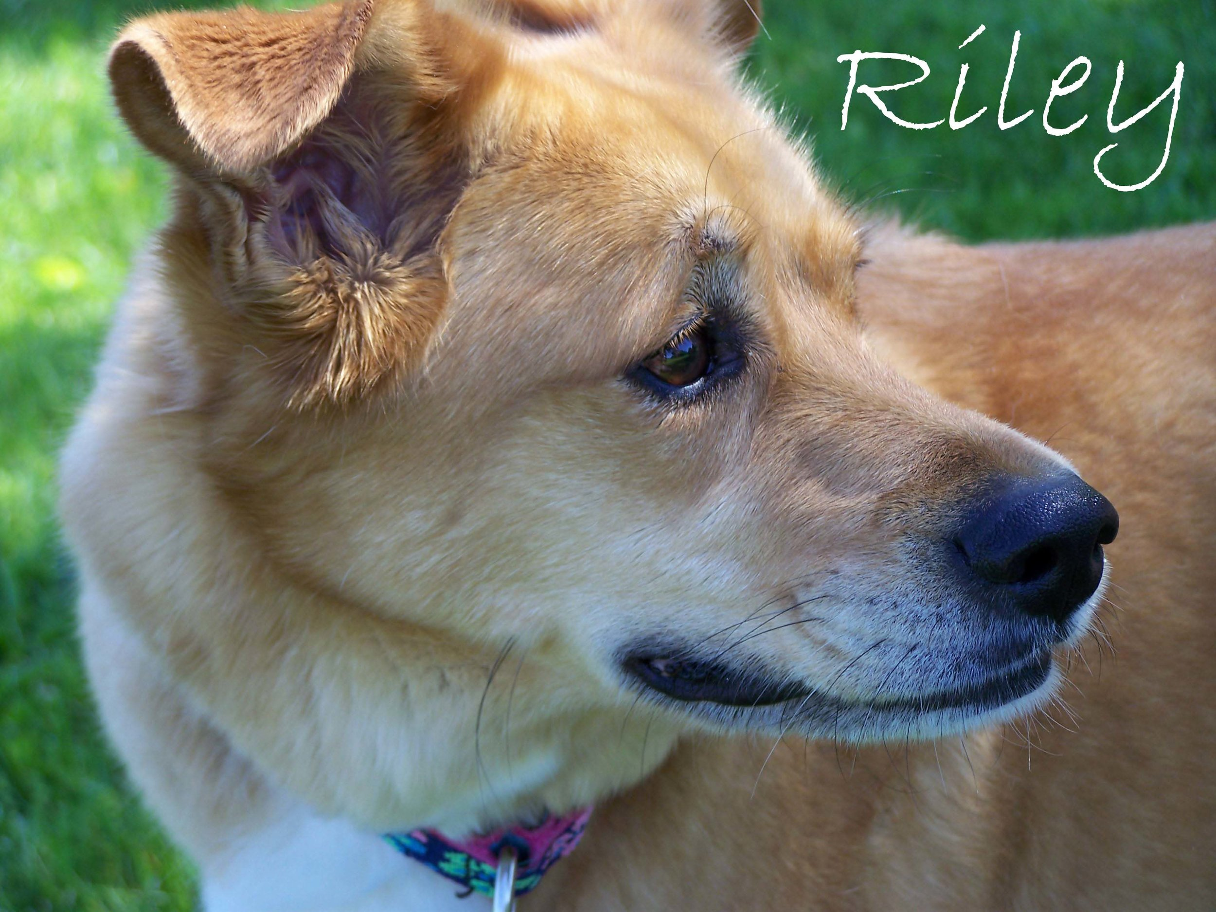 Riley2Reduced for web.jpg