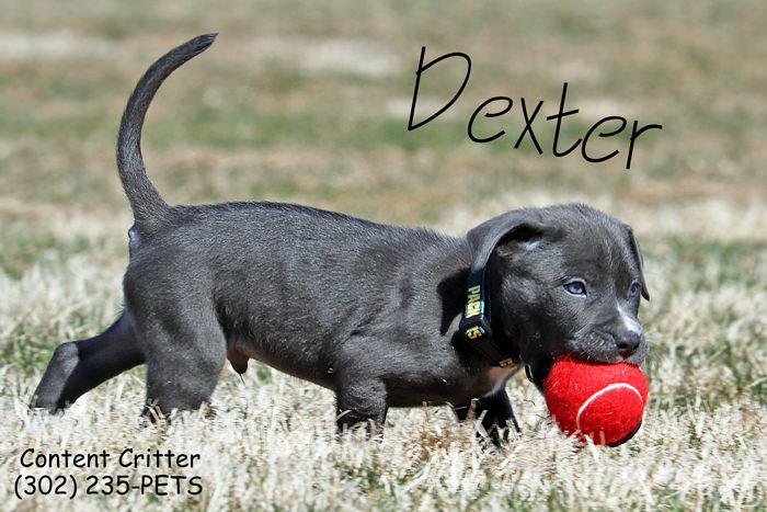 Content Critter Puppy Sitting.jpg