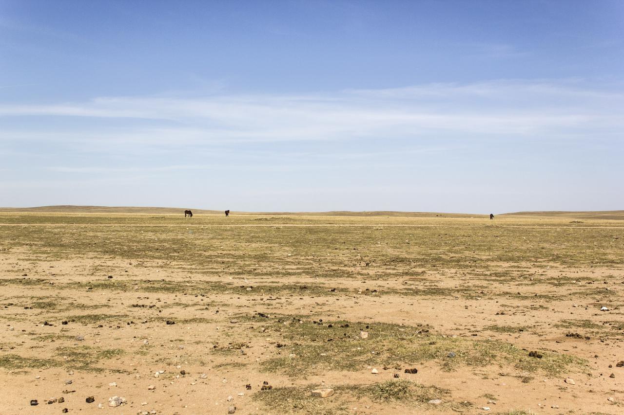 Overgrazed land in Inner Mongolia.  Source .