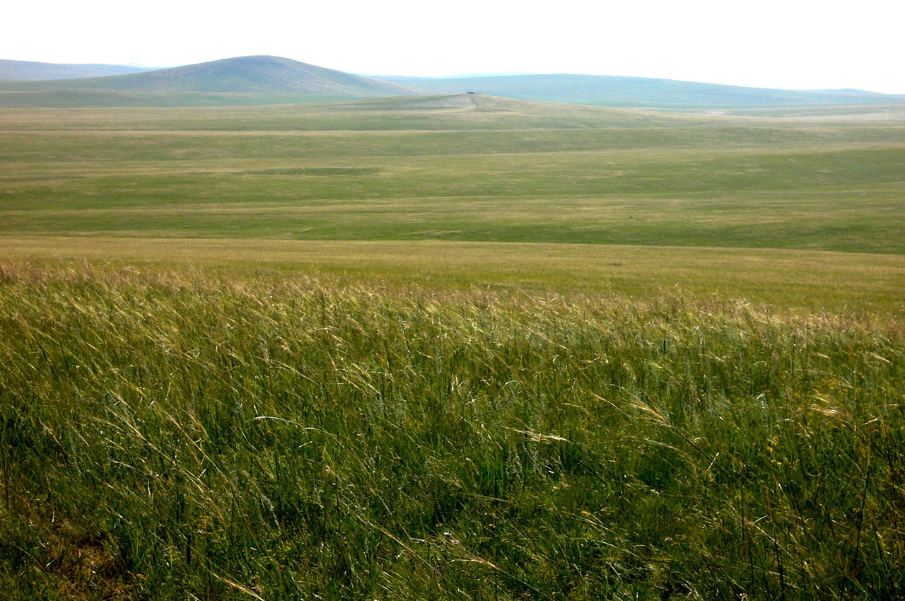 Healthy land in Inner Mongolia.  Source .