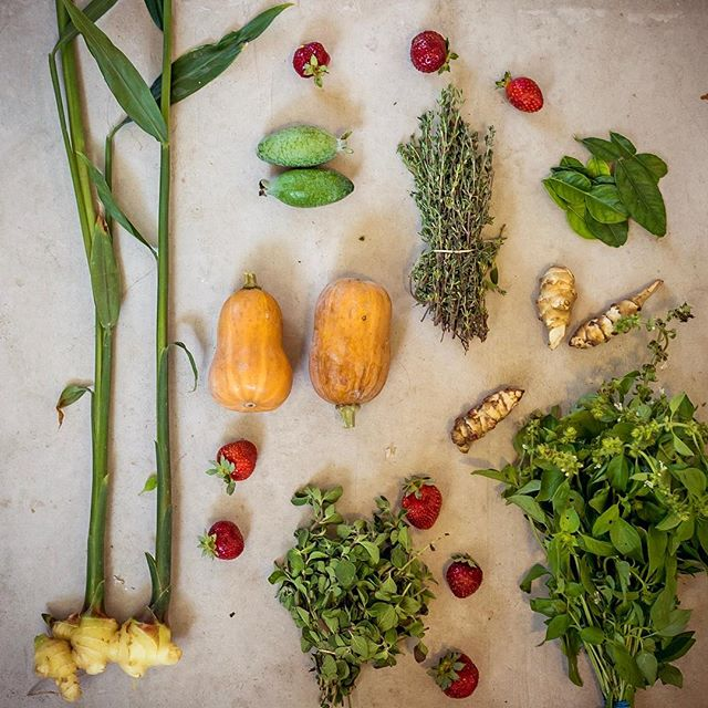 Today's #FarmersMarketHaul ����� How many of these can you name?