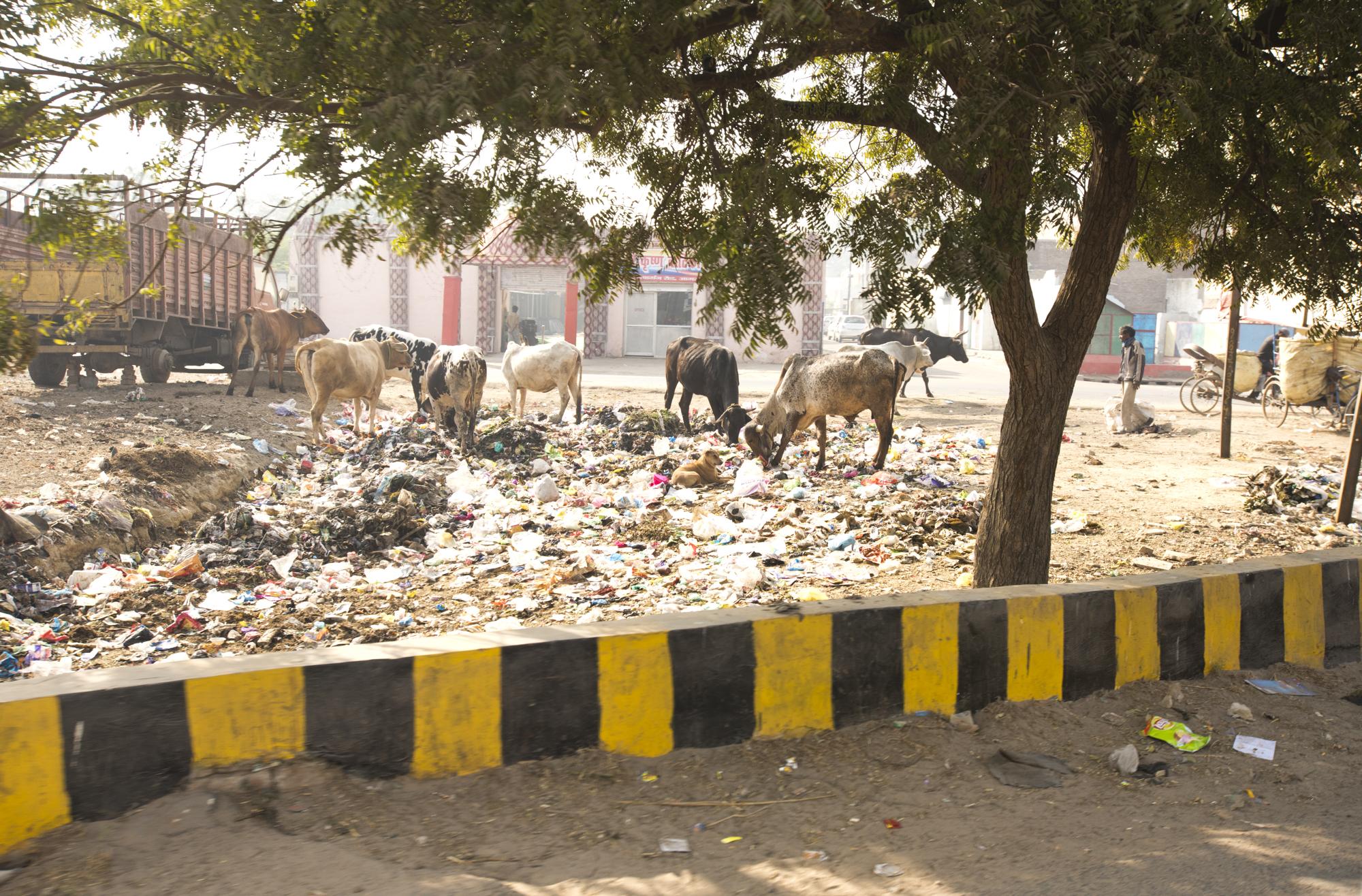 Agra-7222.jpg