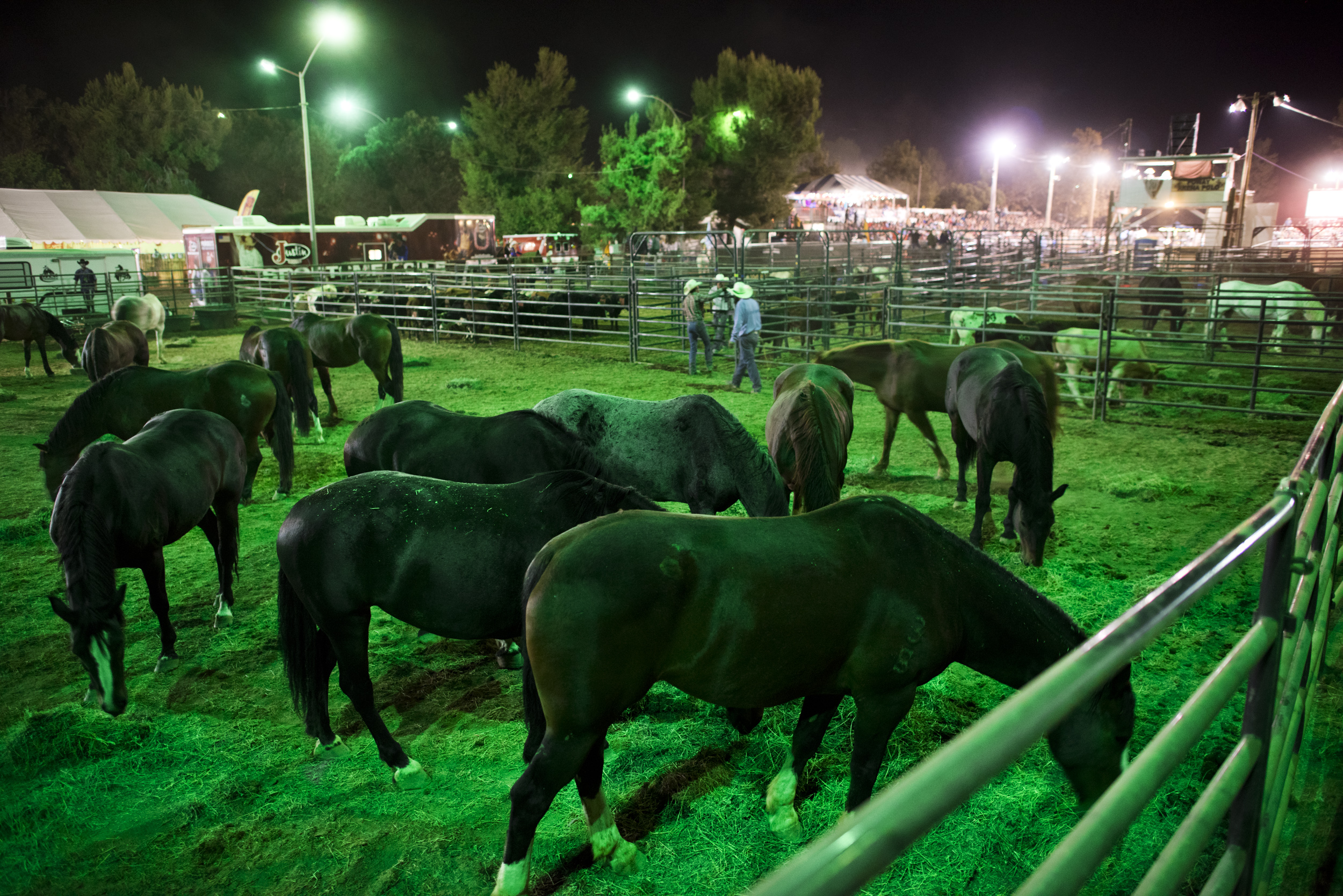 Rodeo-9368.jpg