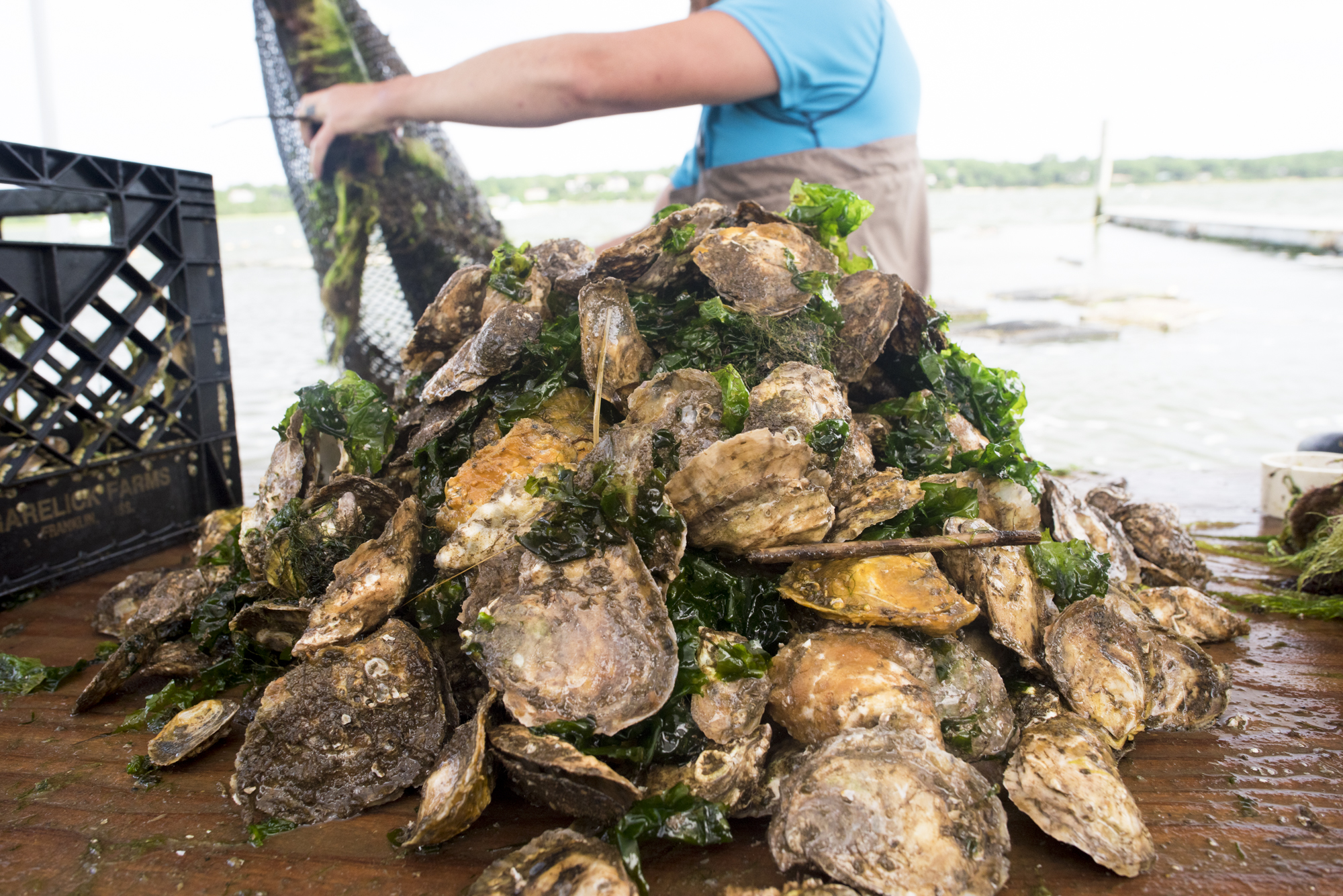 Oysters-5159.jpg