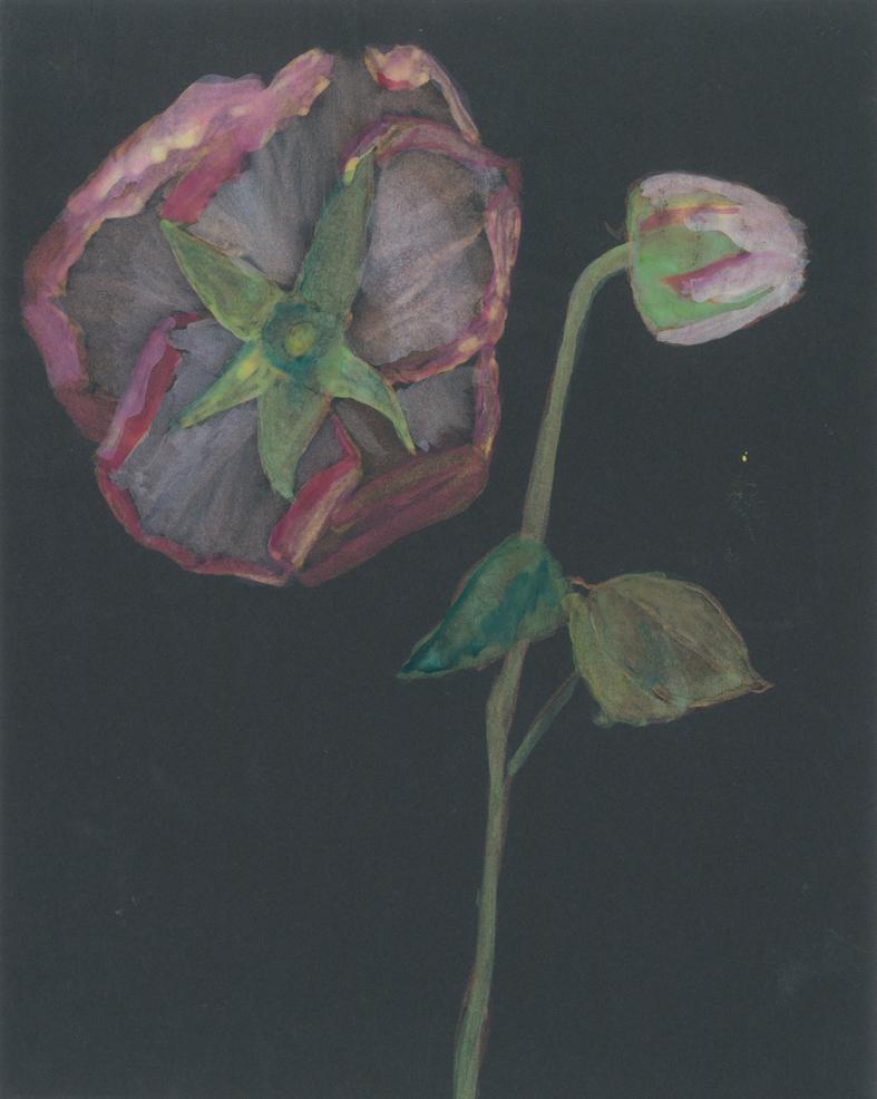 Dark Roses.jpg