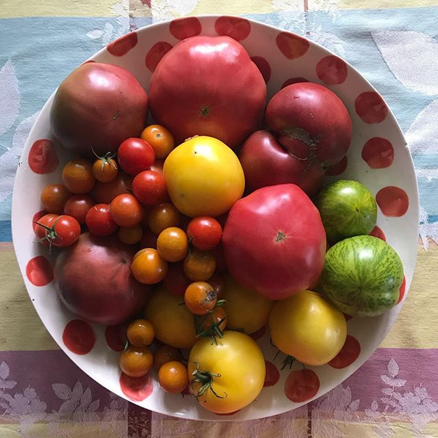Tomatoes from the garden. #tomatoes #columbiacountyny #heirloomtomatoes @davistudio bowl