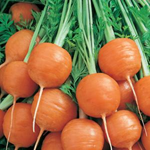 Parmex Carrots