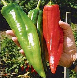 Nu Mex Big Jim Peppers